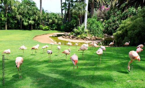 Grupa różowych flamingów