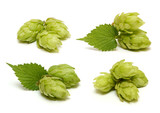 Hop cone set isolated on white background - 200369297