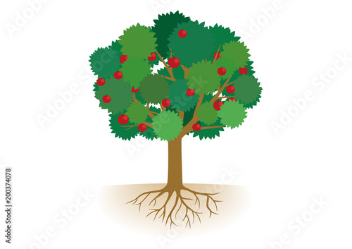 根っこ付きりんごの木