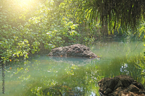 Fotobehang Olijf Green emerald jade water is a river of the tropics rays of the sun, a green beautiful landscape and palm trees. India, GOA, Arambol. Morning in the tropics