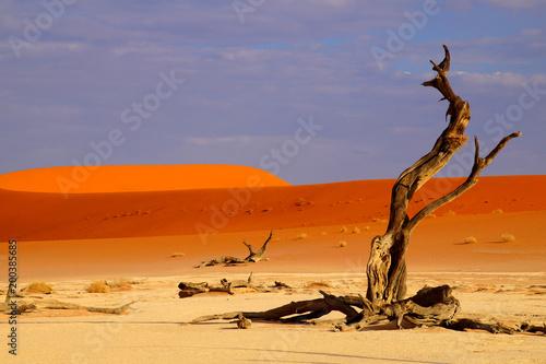 deadvlei Namibia - 200385685