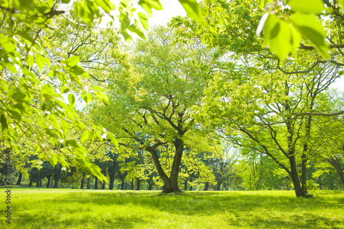 Keuken foto achterwand Geel 公園 木