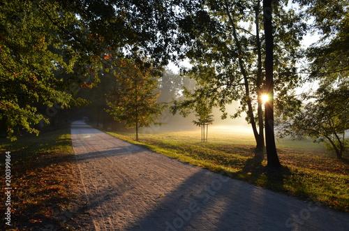 Fotobehang Weg in bos jesienny park o wschodzie słońca, Polska