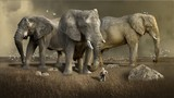 three elephants.