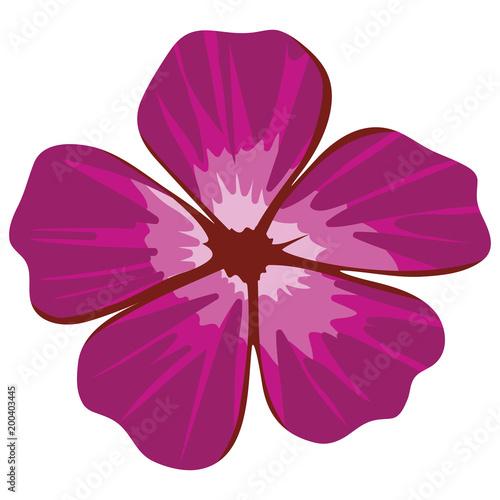 ładny ozdobny kwiat lilii