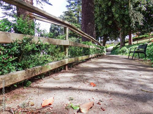 Fotobehang Weg in bos Parque de Lombardeiro