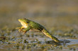 Green frog jump on a beautiful light