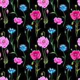 Seamless pattern of cornflowers and poppies, watercolor painting on a black background.