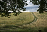 Strada nell'erba