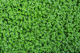 Background of tiny green leaves. - 200432407