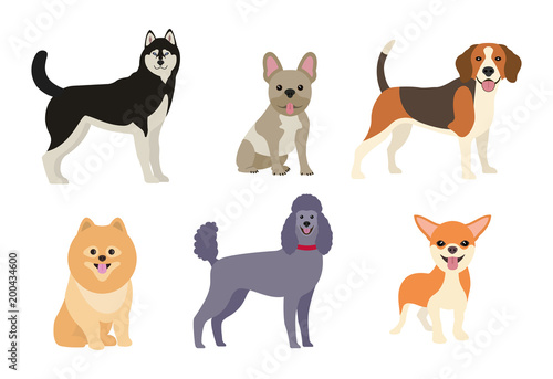 Different dogs collection. Vector illustration
