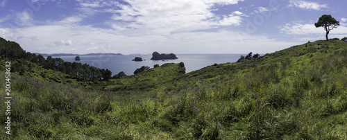 Plexiglas Cathedral Cove catherdral cove day hike beach view new zealand vacation family kids