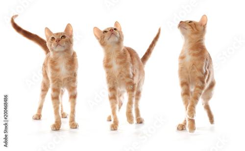 Cute little orange tabby kitten, isolated on white background