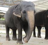 An elefant