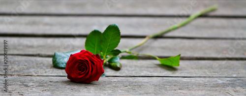 Foto Murales Rose on wood