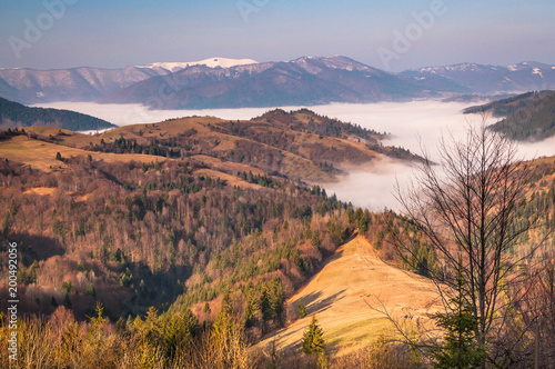 Foto op Aluminium Cappuccino Spring comes to the Carpathian Mountains