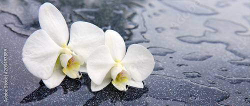 Two white orchid flowers . © Swetlana Wall