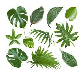 Collage of exotic plant green leaves isolated on white background