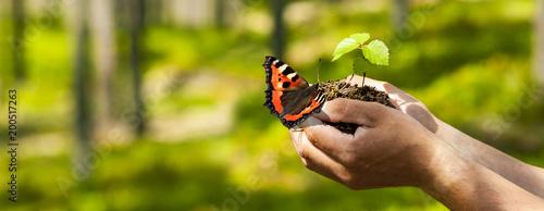 Plexiglas Vlinder Schmetterling auf der Hand