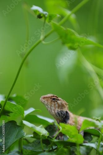 Foto Murales chameleon head closeup