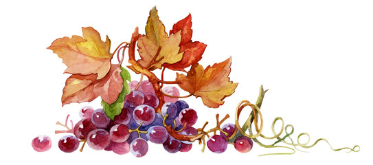 grapes on white background © Алексей Панчин