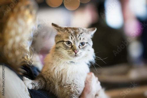 Frightened fluffy homeless cat in hands of girl volunteer in shelter for homeless animals. Girl takes cat to her home. Concept of humanity, kindness