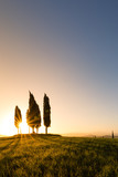 Tuscany, Italy. Spring landscape with rolling hills and green meadow, cypress trees in the morning