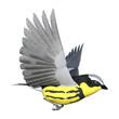 3D Rendering Songbird Wrabler on White