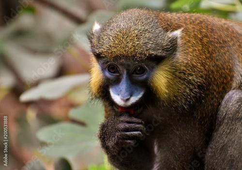 Monkey Animal Fluffy Photo Hunt Portrait