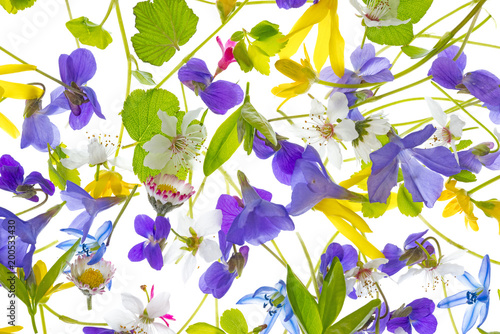 spring flowers - floral pattern - isolated on a white background - 200533430