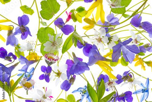 wiosenne kwiaty - kwiatowy wzór - na białym tle na białym tle