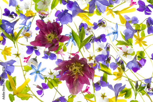 Wall mural spring flowers - floral pattern - isolated on a white background