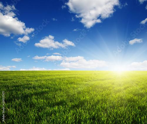 Zielona łąka pod słońcem