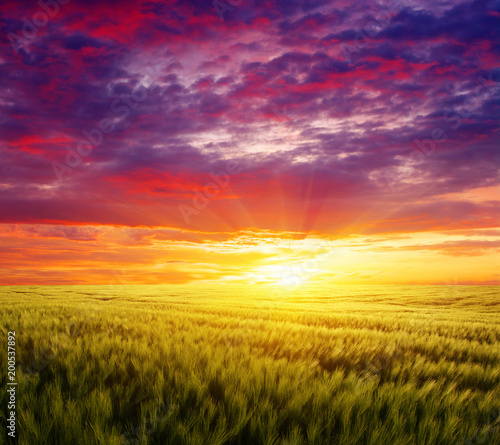 Sunset on the wheat