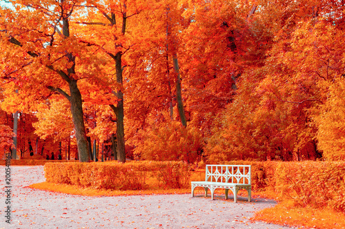 Autumn colorful landscape. Wooden white bench in the autumn park under yellowed autumn trees