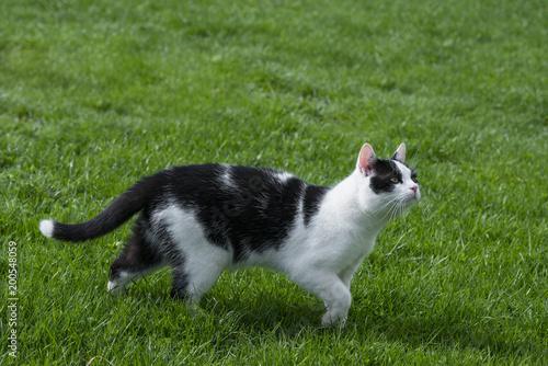 Fotobehang Kat cute cat in grass close up