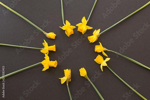 Round okrąg daffodils na czarnym tle