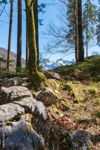 Waldlichtung mit Felsen - 200596097