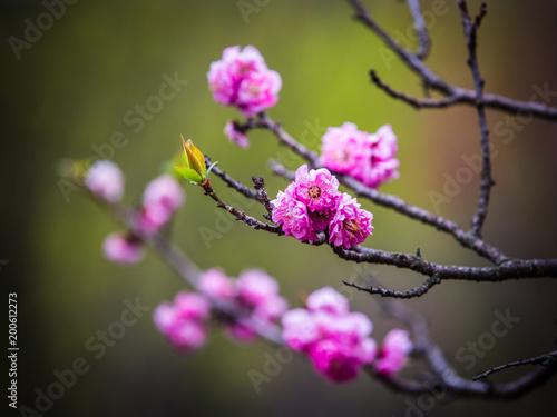 Foto Murales 봄꽃의 계정 돌아왔다!