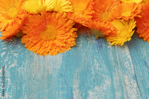 Orange yellow flowers of calendula on turquoise wooden aged background