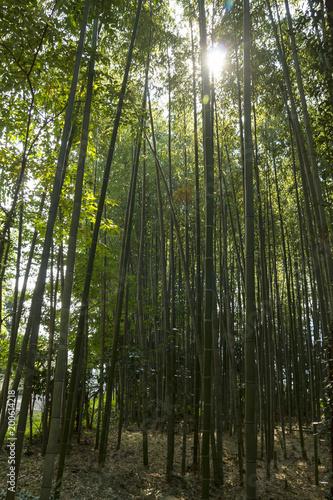 Fotobehang Kyoto Bamboo forest at Kyoto, Japan