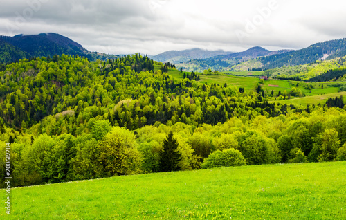 Foto op Plexiglas Lime groen forested hills of mountainous rural area. beautiful springtime countryside landscape.