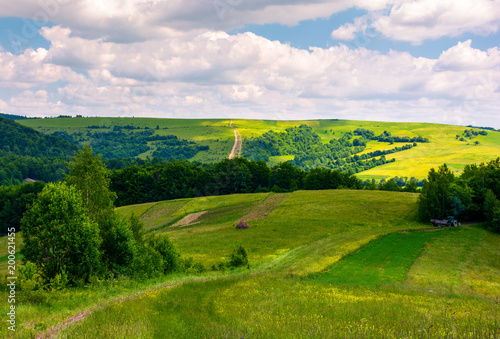 Foto Murales agricultural fields on hills. beautiful summer landscape