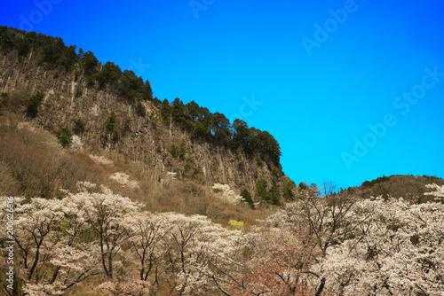 Fotobehang Blauw 奈良の春 青空バックの桜風景