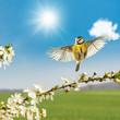 Leinwanddruck Bild - Der Frühling kommt!