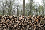 bois forêt arbre tronc abattre gestion forestière coupe chauffage énergie bûcheron entretien domaine