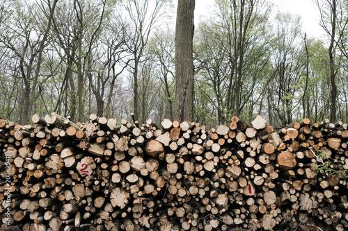 bois forêt arbre tronc abattre gestion forestière coupe chauffage énergie bûcheron entretien domaine - 200629411