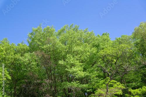 Foto Murales 青葉と春の空