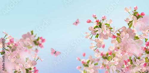 Fototapeta Spring Cherry Blossom