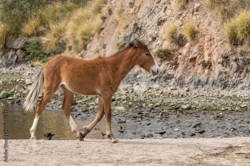 Fotobehang Paarden Wild Horse in the Arizona Desert